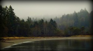 joemma beach in the fog