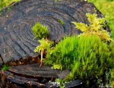 stump forest