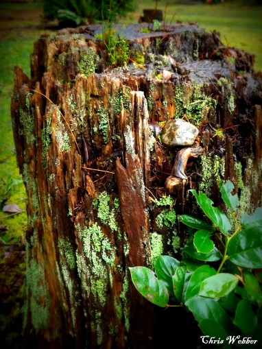 stump scenery